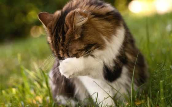 кот, коту, стыдно, пушистому,