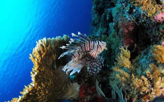 sous, marin, corail