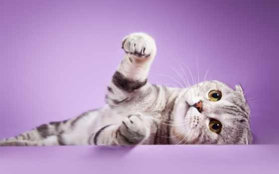 котят, милых, милые, котята, youtube, video, самые,
