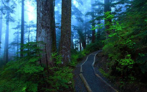 fondos, pantalla, bosques, bosque, naturaleza, para, senda, con, pinterest,