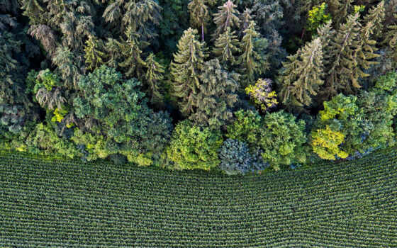 природа, trees, категория, взгляд, hedge, первую, лес