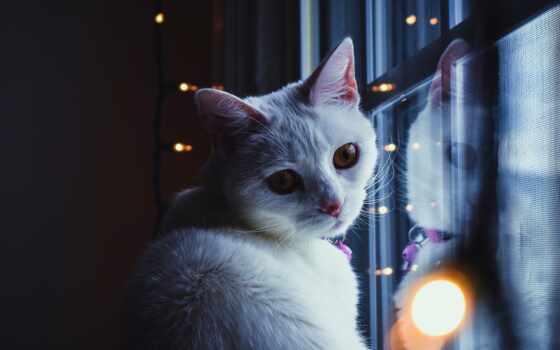 кот, окно, взгляд, white, свет, garland, sit, animal, красивый, лампочка
