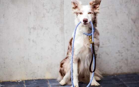 собака, веревка, masco, mac, поводок, cuerda, pet, pantalla, центр, ataman