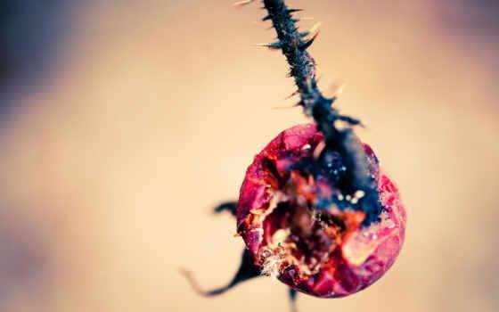 flowers, скворцов, plants, masaüstü, full, об, you, arkaplan, kağıdı,