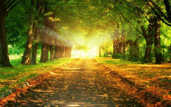 деревя, аллея, осень