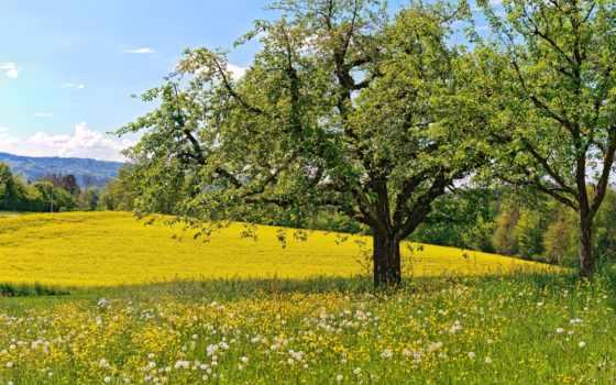 весна, широкоформатные, цветы