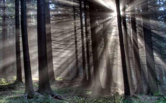 rays, солнца, лес, trees, сосны, лесу, сумерки, старые,