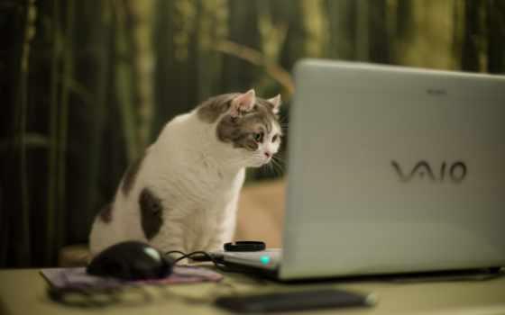 кот, ноутбук, компьютер, desktop, vaio, like, free,