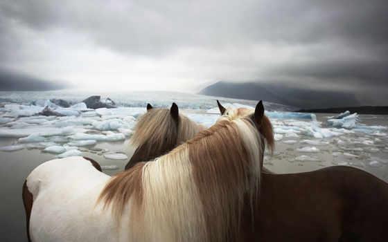 йоге, лошади, фотограф, flach, tim, животных, лошадь, высказывания, обсуждение, liveinternet,
