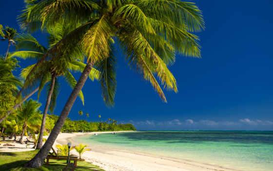море, пальмы, побережье, пляж, природа, palm, фотографий, моря, wreck, пользовательски,