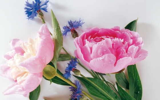 flowers, rapidshare