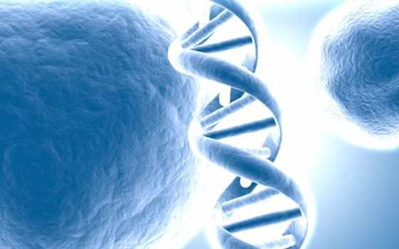 dna, геном
