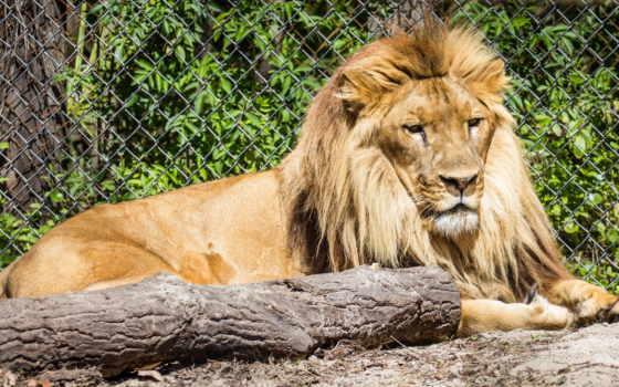 львы, количество, файлов