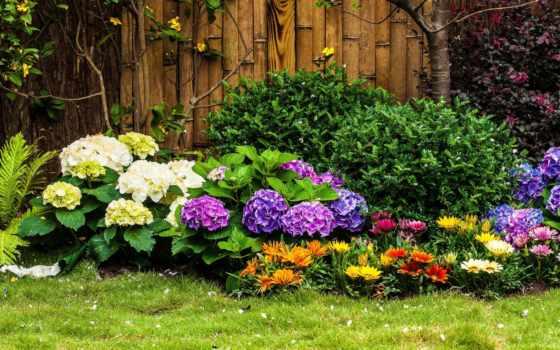 kwiatowa, rabata, paprocie