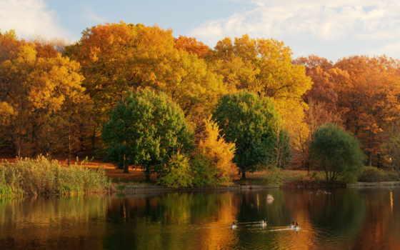 природа, осень, озеро, времена, года, листья,