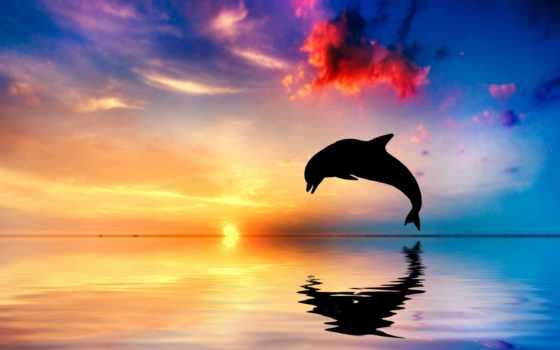 дельфин, стоковые, ocean