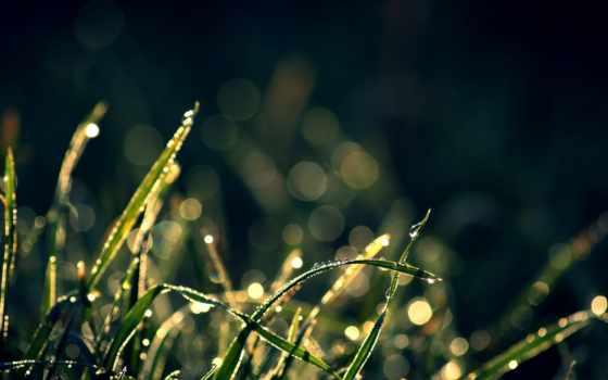 трава, капли, макро, блики,