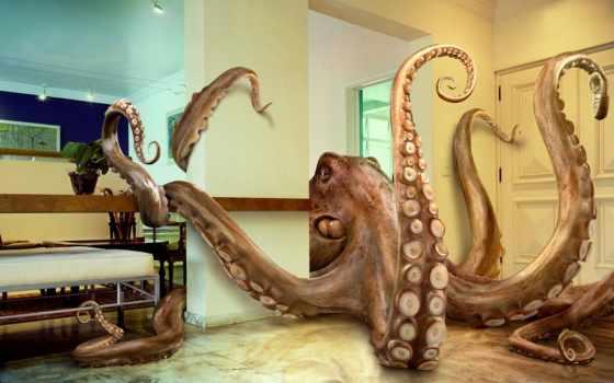 осьминог, юмором, мультяшный, осьминогов, комнате,