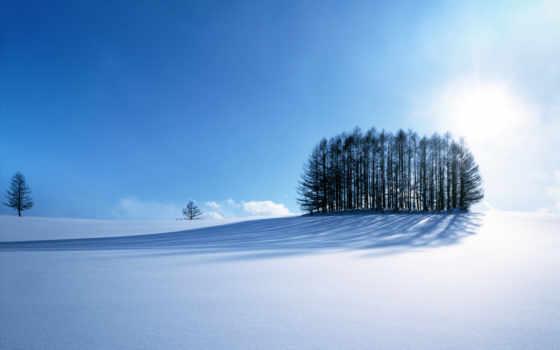 margin, зимние, winter, яndex, заставки, лес, grove, landscape, посреди,