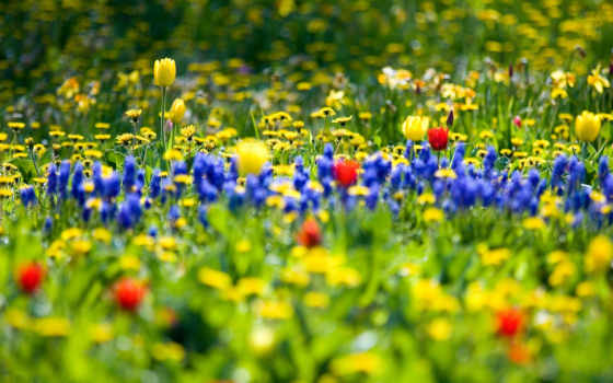 поле, cvety, весеннее