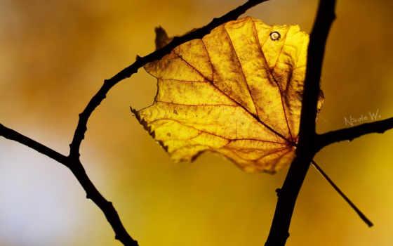 осень, макро