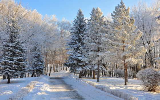 снег, winter, деревья