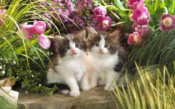 кошки, только, красивые