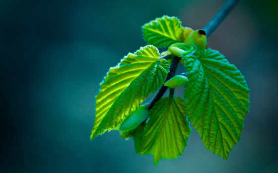 макро, природа, листва