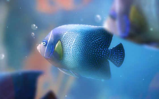 аквариум, fish,