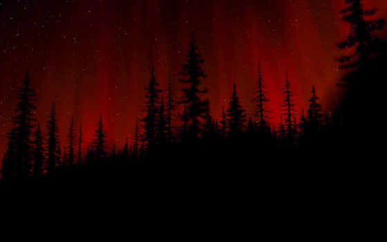 лес, dark, black, images, tumblr, малиновый, red, ночь,