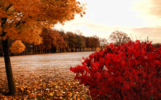 park, осень, warning, буря,