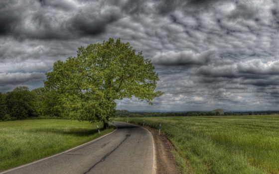 поле, дорога, тучи, небо, молнии, пшеничное, дерево, фоны,