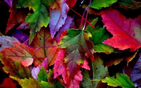 осень, usa, разноцветные, листва, forests, изображение, ствол, дерево, colorado, aspen,