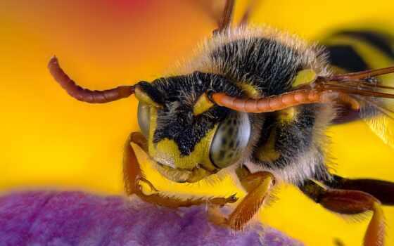 cover, пчелка, первую, супер, rate, браун, kubernete, tilt