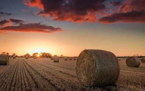 поле, сено, природа, закат, bale, apple, дерево, небо, luchit