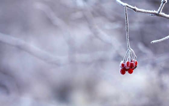ягоды, зима