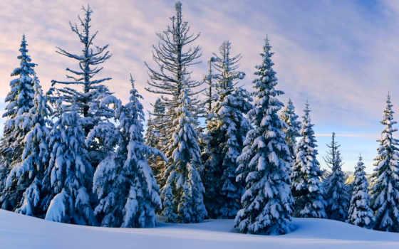 winter, снег, вечер