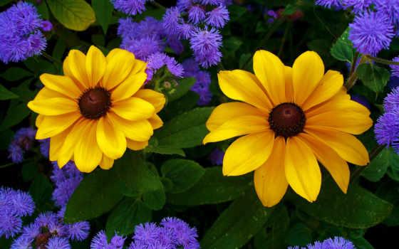 cvety, flowers, best