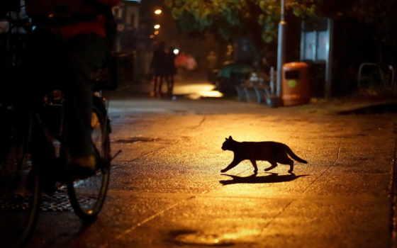 кот, ночь, силуэт, улица, улице, lantern,