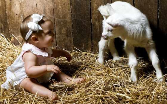 козел, козы, год, года, zhivotnye, будет,