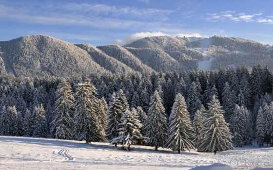 лес, winter, зимой, заснеженный, хвойный, разрешениях, природа, нравится, разных, снегом,