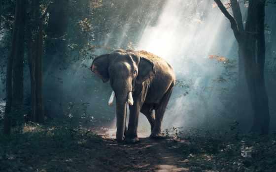слон, лесу, большим
