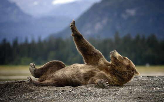 медведь, wild, мишка, природа, animal, grizzly, красивый, картинка, cool, гора