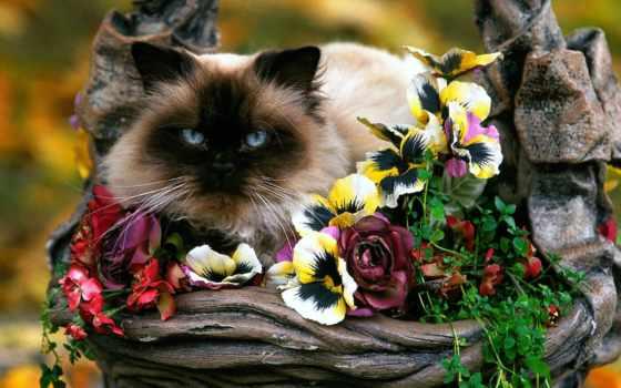 кот, цветах, цветы