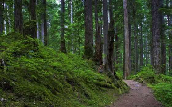fondos, rboles, pantalla, paisajes, bosque, verde, camino, naturaleza,
