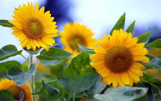природа, часть, цветы, jpeg, жанр, соотношение, сторон,