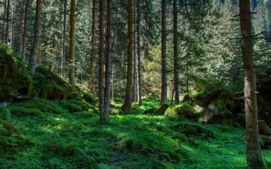 природа, широкоформатные, красивые, качественные, заставки,