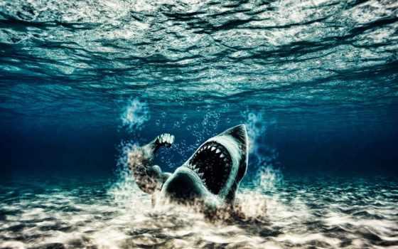 акула, качок, mutant, water,