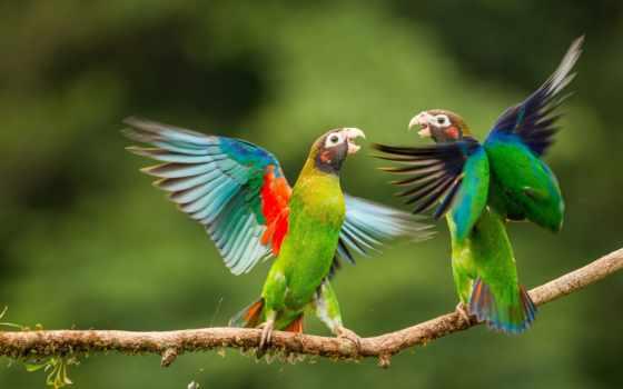 birds, desktop, птица, попугай, images, самый,