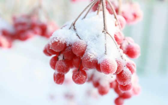 рябина, winter, снег, branch, ягода, зимой,